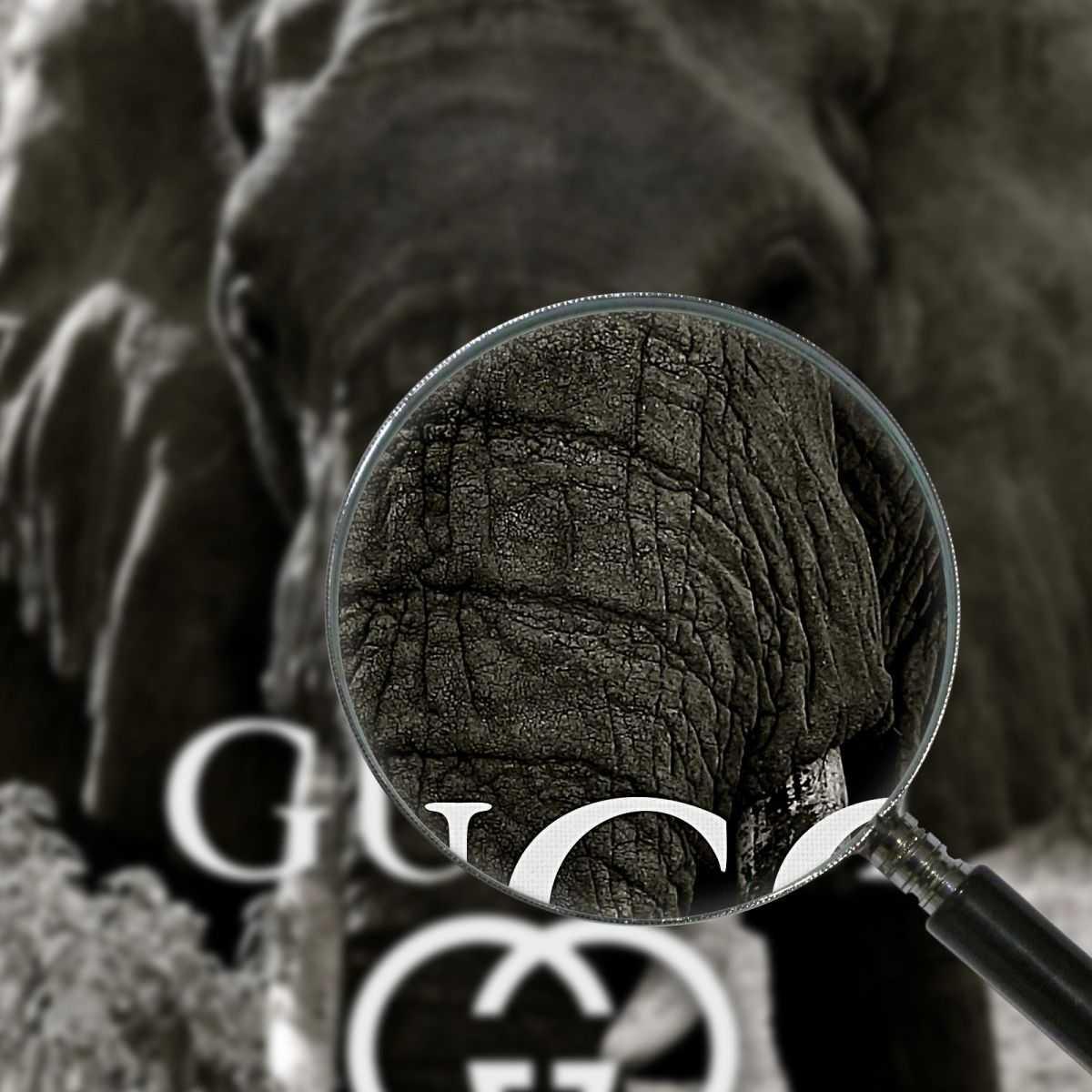 Quadro Gucci elefante bianco e nero stampa su tela guo25